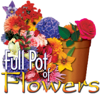 Full Pot of Flowers