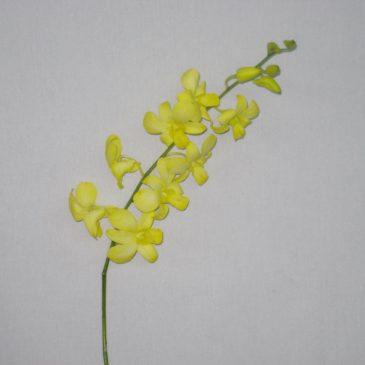 Tinted Yellow