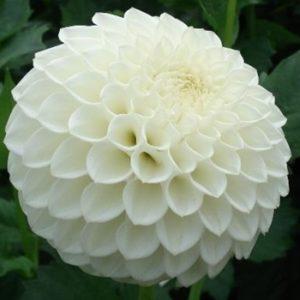 dahlia-reycroft-jan-white