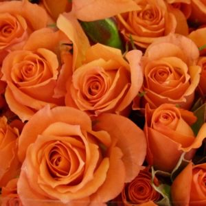spray-rose-babe-orange