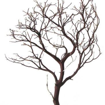 Manzanita Leafless