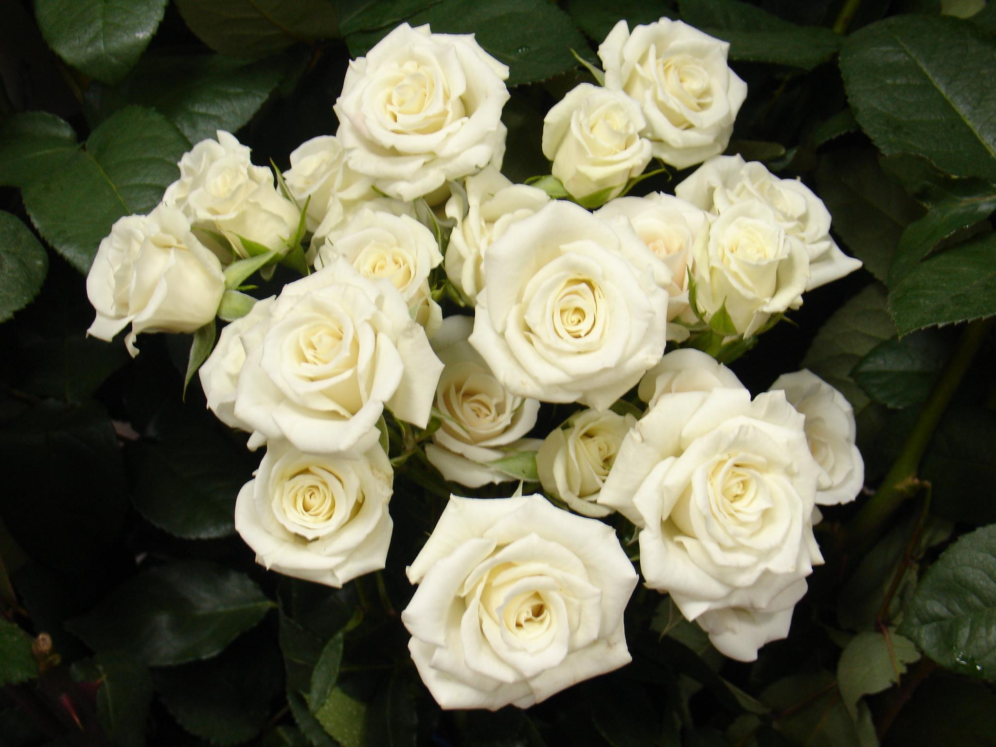 Majolika White Full Pot Of Flowers