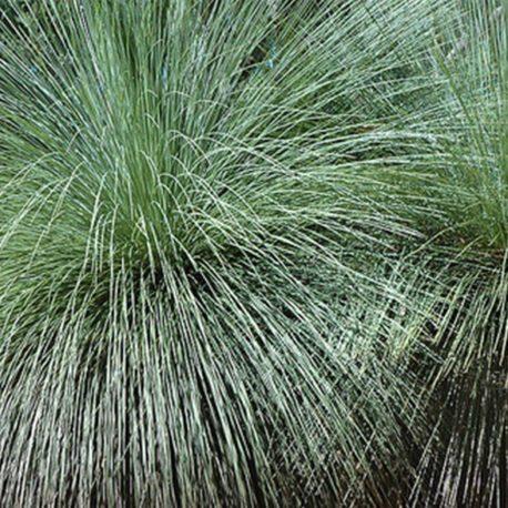 steel grass