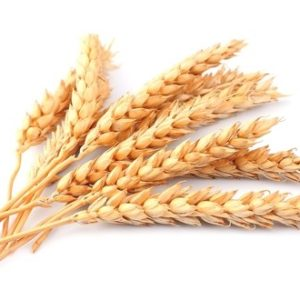 wheat-stalk-500x330
